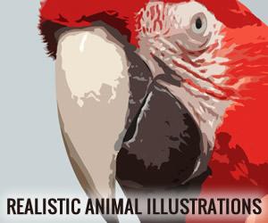 חיות מצוירות – סט......