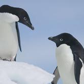 pinguin 2 update thumb 165x165